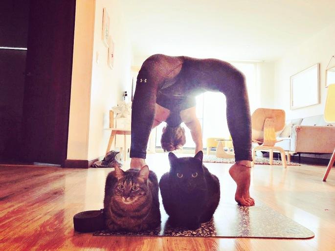 Dhanurasana, postura del arco. #YogaTime #CatsLovers